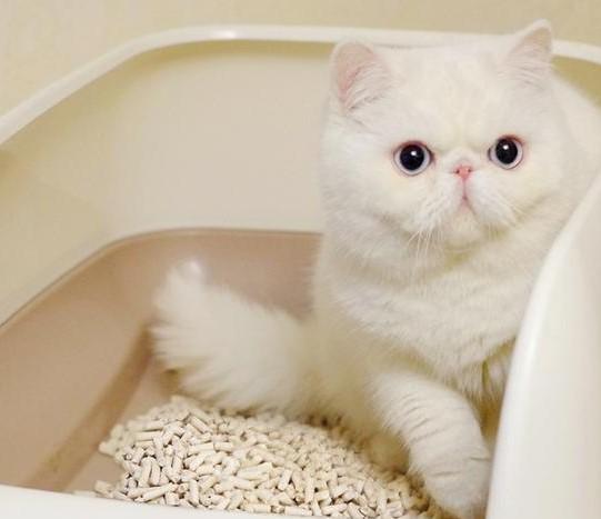 猫砂商标转让类别应该选哪一类?