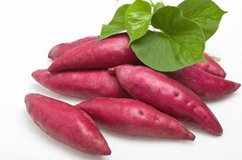 红薯属于哪一类商标?红薯属于商标第几类?